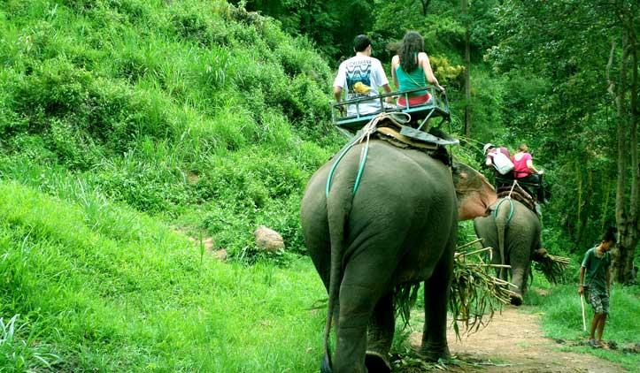 Passeio de Elefante em Chiang Mai
