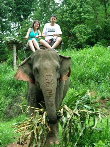 passeio-de-elefante-chiang-mai