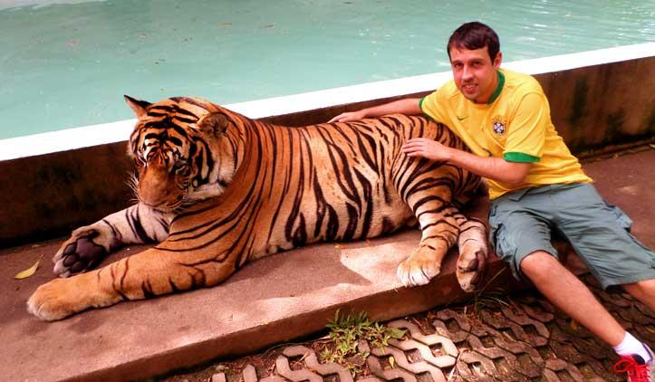 Tiger Kingdom: entrando na jaula do tigre