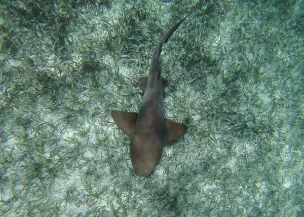 nadar-com-tubarao