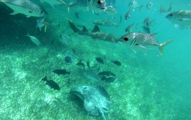 Tubarão, raia e peixes