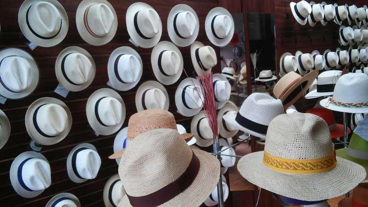 vários modelos de chapéus panamá