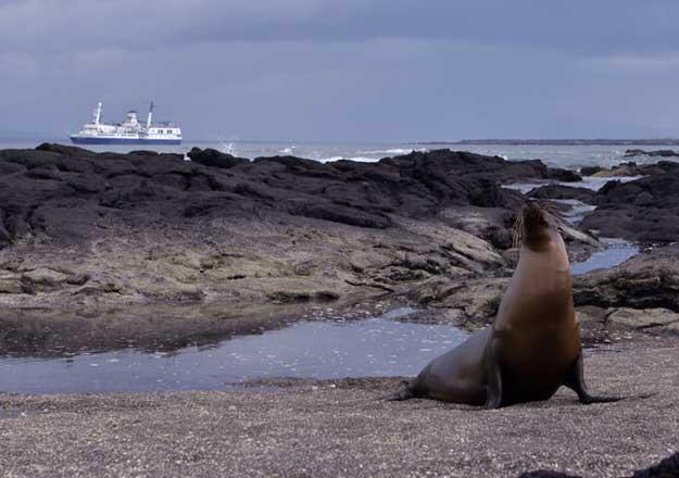 foca em ilha de galapagos no equador